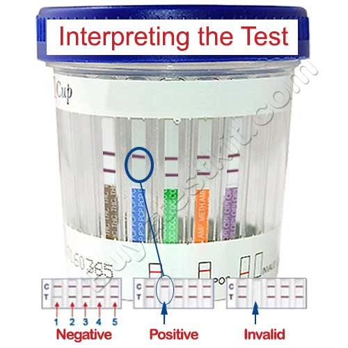 5 panel drug test eco2