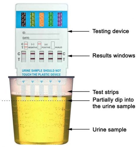 drug test instructions